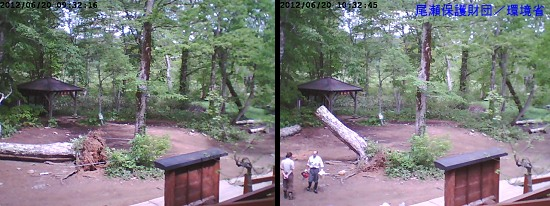 20120620山の鼻倒木.jpg